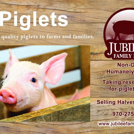 Jubilee Farm Postcard - Piglets, Front_Updated 10-14