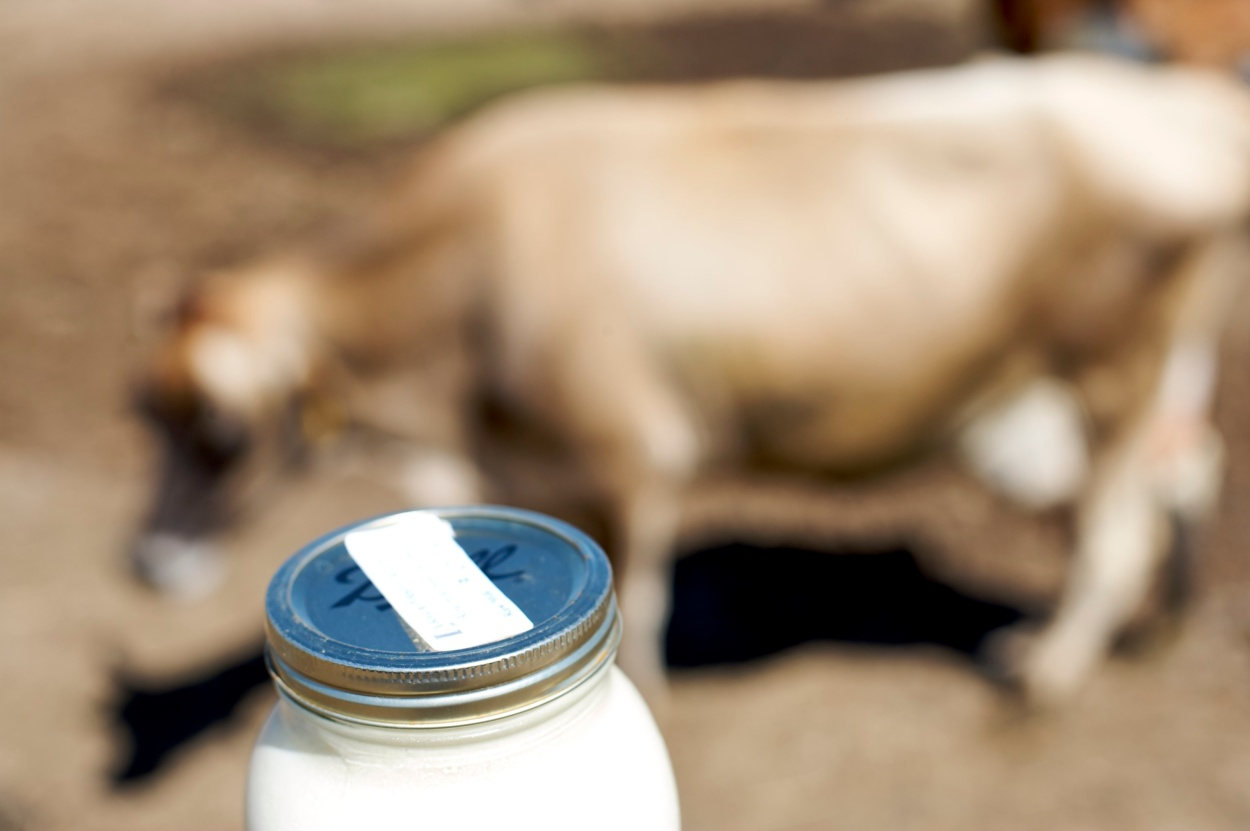 Raw Milk & Cow