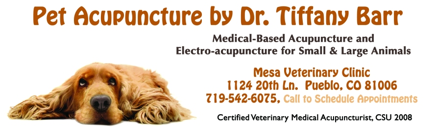 Tiffany's Pet Acupuncture Ad