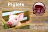 This is the front of the postcard that we produced for Jubilee Family Farm