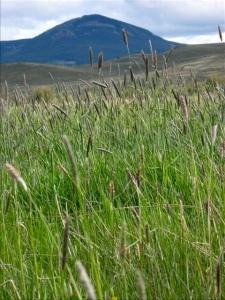 Photo from Parker Pastures (Gunnison) - http://parkerlandmanagement.com