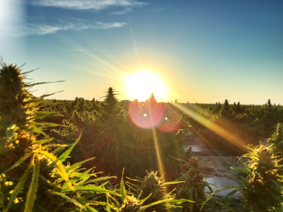 The sun rises over the Whole Hemp Company fields in Southeastern Colorado