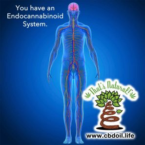 Endocannabinoid System Graphic 1