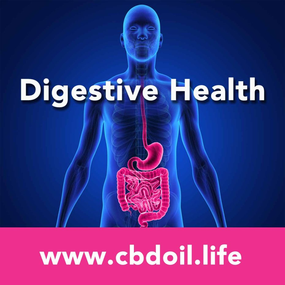 Digestive Health V1