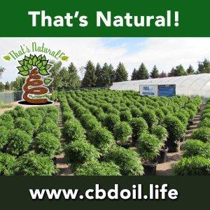 That's Natural CBD Oil from Colorado Hemp