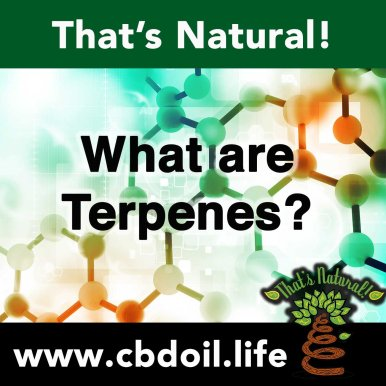 What Are Terpenes V1