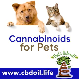 cannabinoids-for-pets-v1