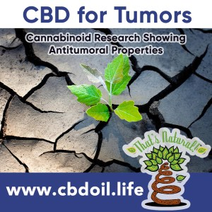 cbd-has-antitumoral-properties-v1