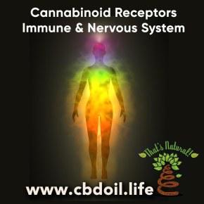 cannabinoid-receptors-nervous-immune-system-v2
