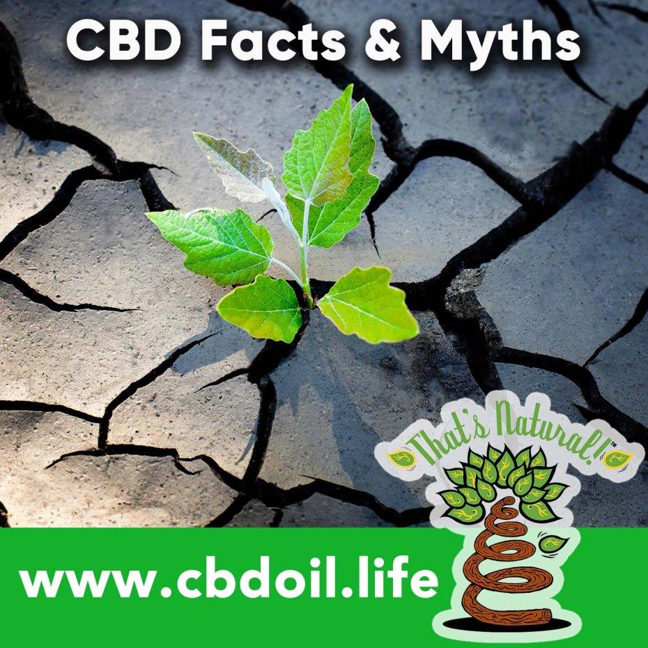 cbd-truths-myths-v1