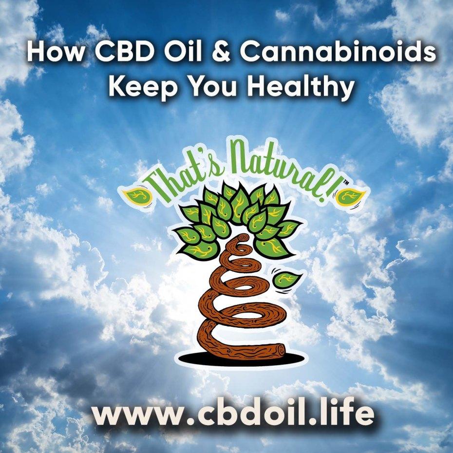 how-cbd-oil-keeps-you-healthy-v1